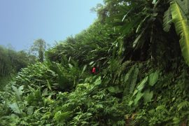 corcovado-bolita-jungle