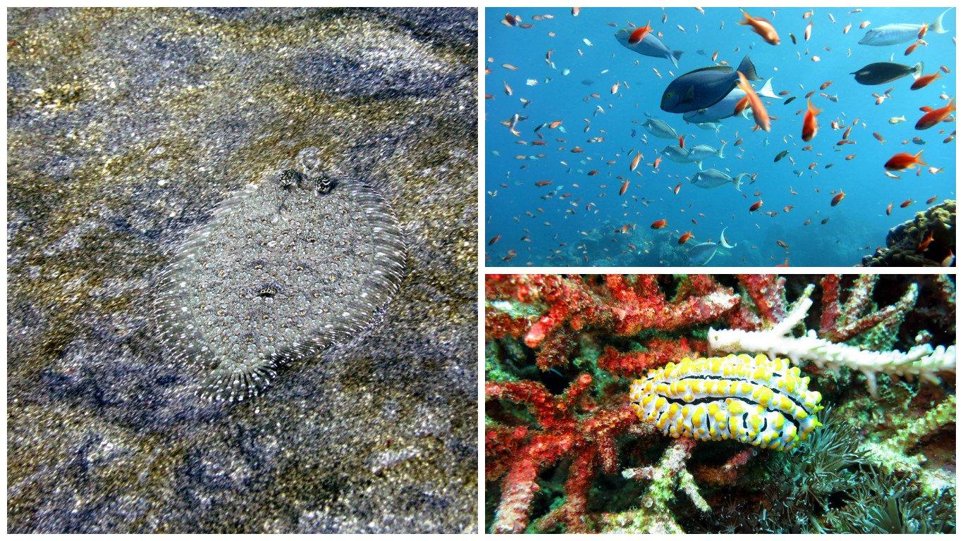 Crystal Bay dive