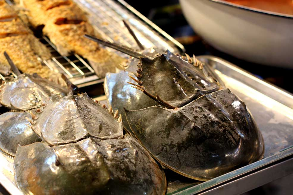 Horseshoe crab, Amphawa floating market, Bangkok