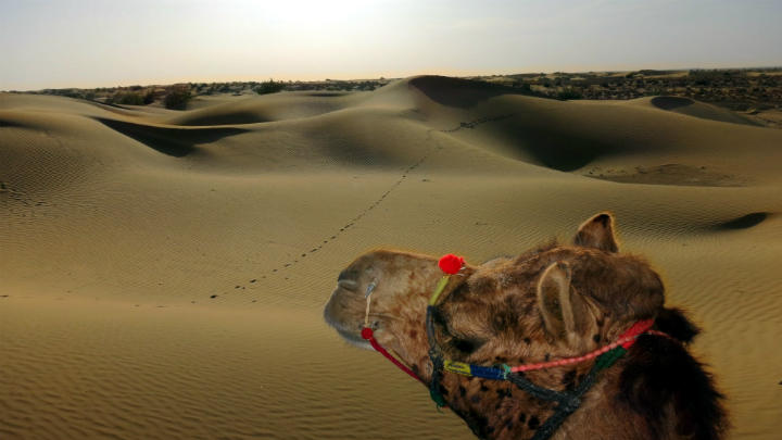 camel safari travel rajasthan
