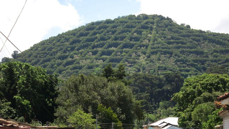 Coffee Plantations around the small town Juayua on the Ruta De Las Flores.