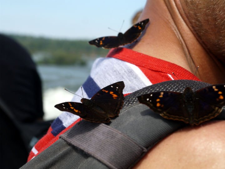 "Butterflies ""attacking"" me on the way to the falls!"