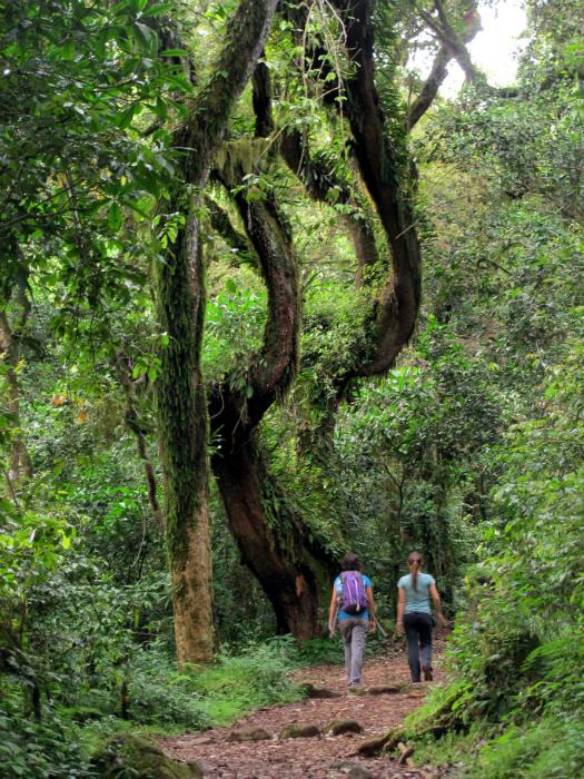 kilimanjaro trek at 1800m