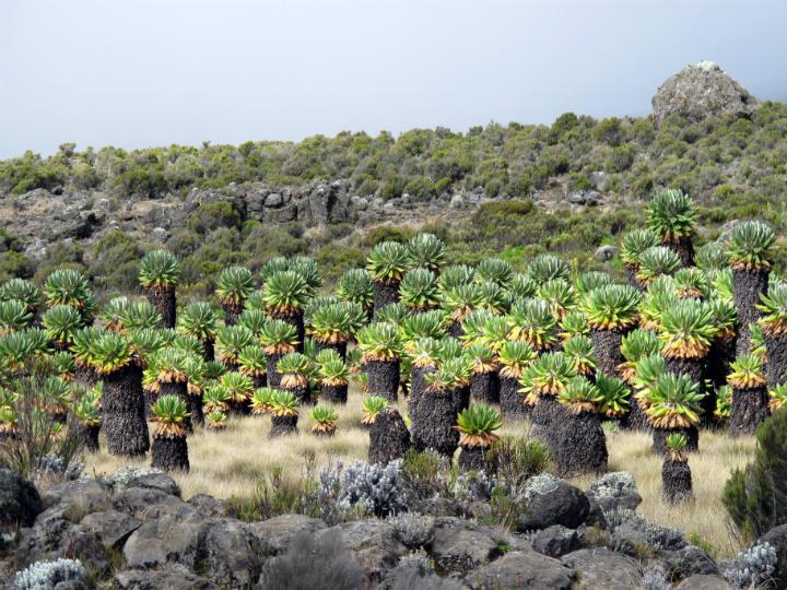 kilimanjaro trek the moorlands