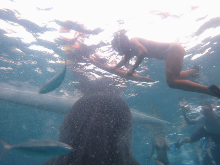 whale sharks Philippines