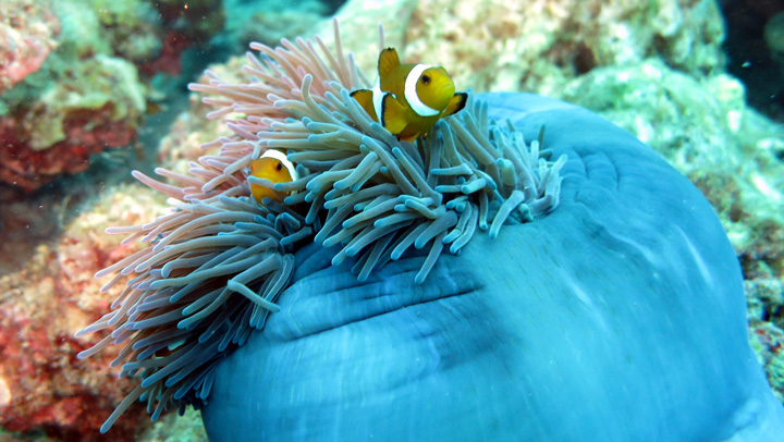 There were really many of clown fish and anemone. I Love these guys!