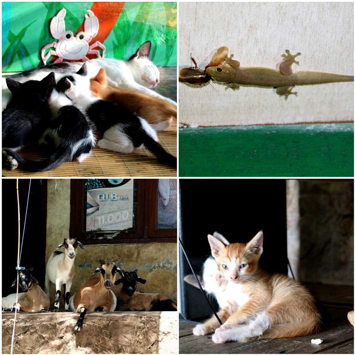 Animals of Pulau Weh