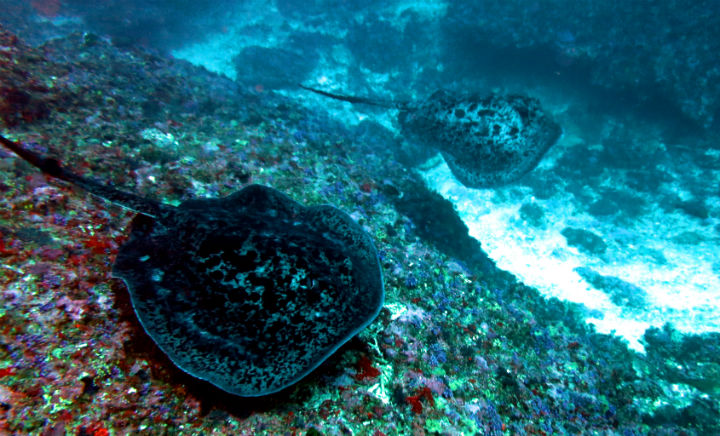 marble rays blue corner Nusa Penida Balie