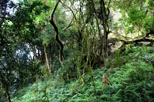 Big part of the trail is through indigenous forest. Typical scenery on Amatola trail