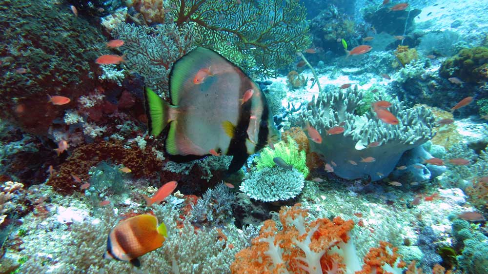 A variety of fish an aquarium can never duplicate at Crystal Rock diving around Komodo Island
