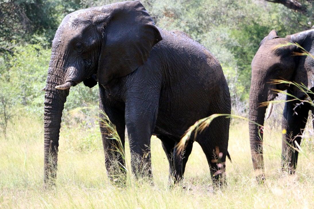 Finally elephants!!! Mahongo National park, Caprivi