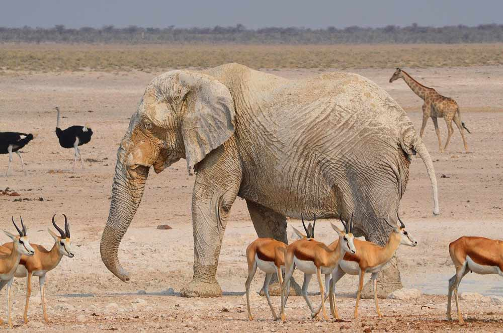 Many African animals together in Etosha, Namibia