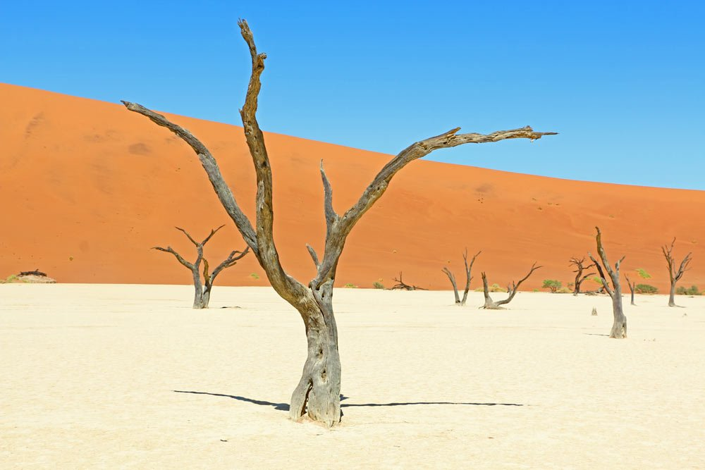 Many dried trees at Deadvlei in Sossusvlei