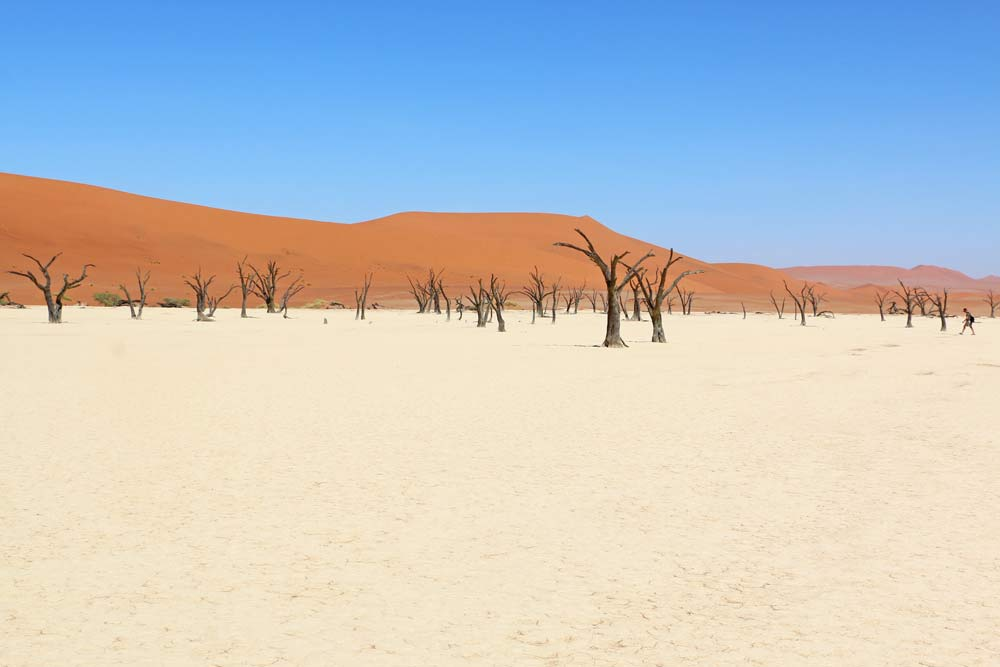 Deadvlei in Sossisvlei is one of the highlights of Namibia