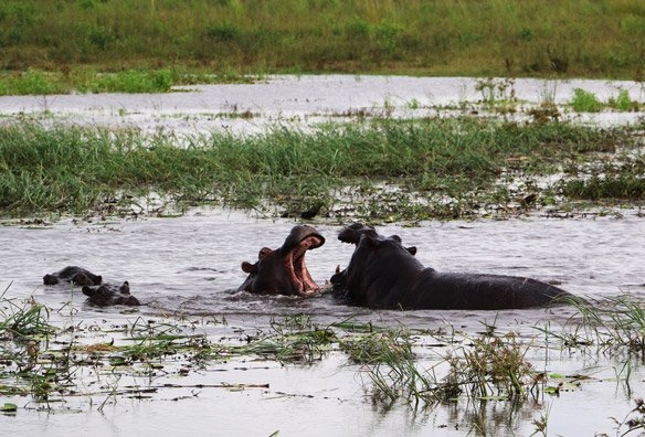 Chobe budget safari