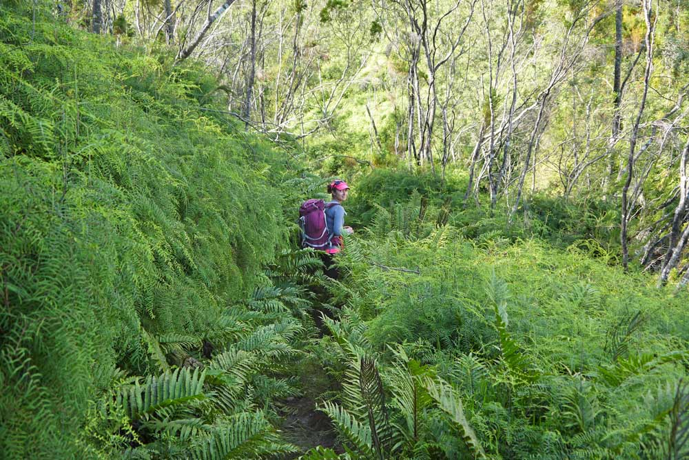 Jurassic Park forest on the Outeniqua Trail