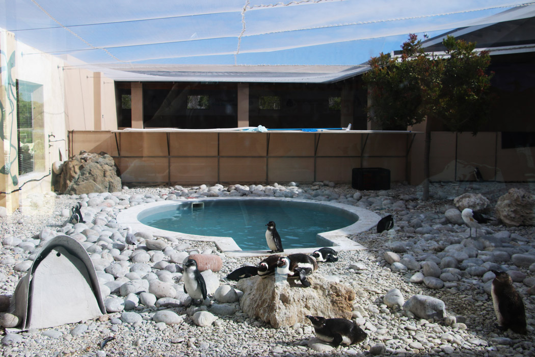 African Penguin and Seabird Sanctuary