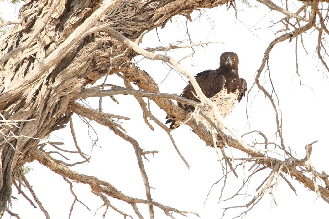 A Martial Eagle, we saw many bird of prey.