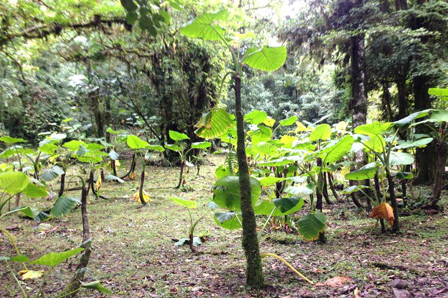 The Cloud Forest in Monteverde is an amazing place to visit in Costa Rica