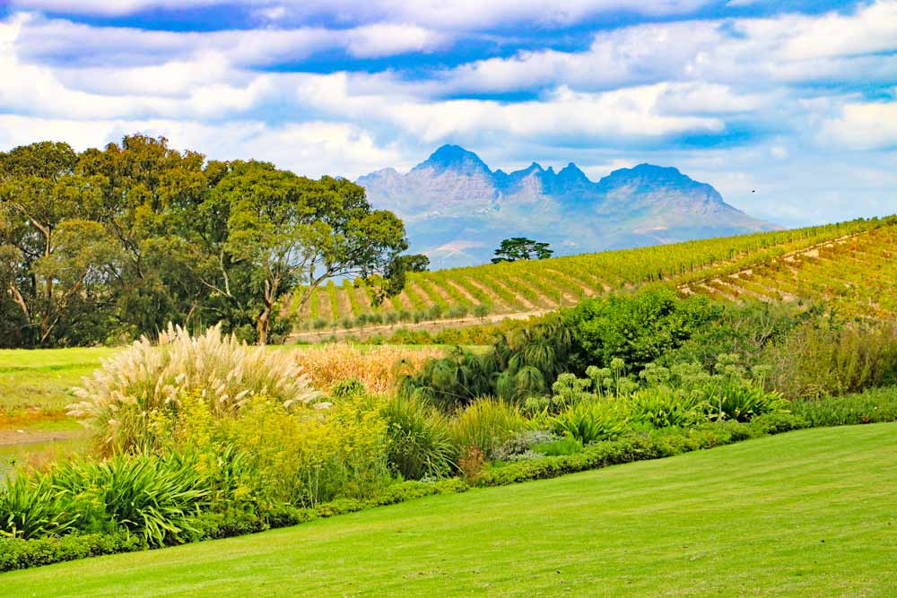 Peaceful landscape at Jordan wine farm near Stellenbosch