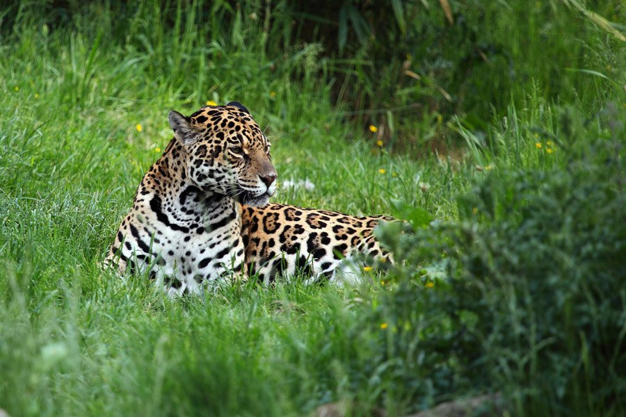 Pantanal places to visit South America