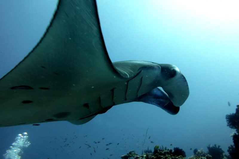 Complete Guide to Dive Komodo Island Indonesia - Stingy Nomads