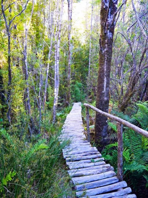 A boardwalk trail in Pumalin park, Patagonia