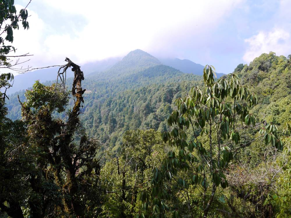 Green hills and forest, Panchase trek