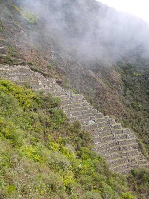24 llamas terrace at Choquequirao ruins
