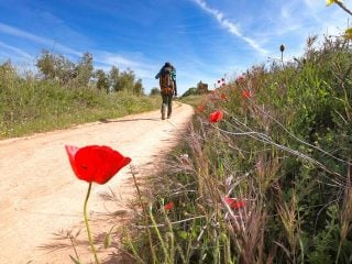 Alya walking through the fields with poppies on the Camino de la Plata in Spain