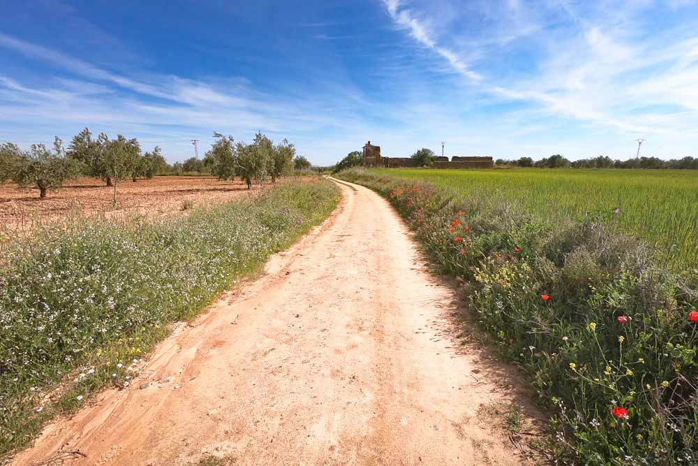 A typical scenery in Andalusia and Extremadura with fields and olive trees