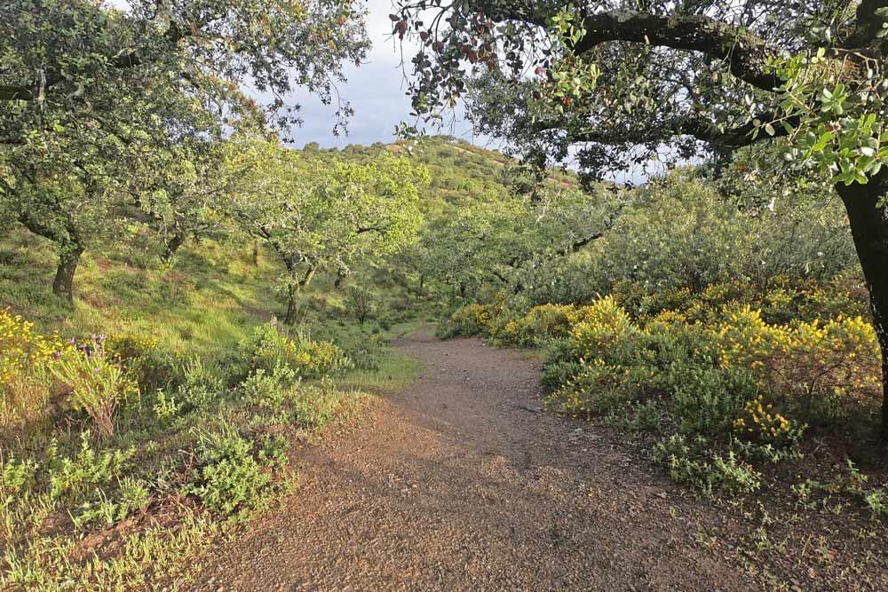 Natural park Sierra Norte in spring, walking the Via de la Plata