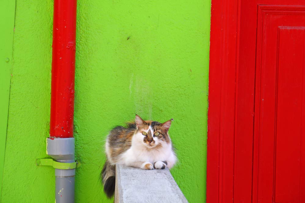 A cat with green eyes at the green and red house in Valparaiso