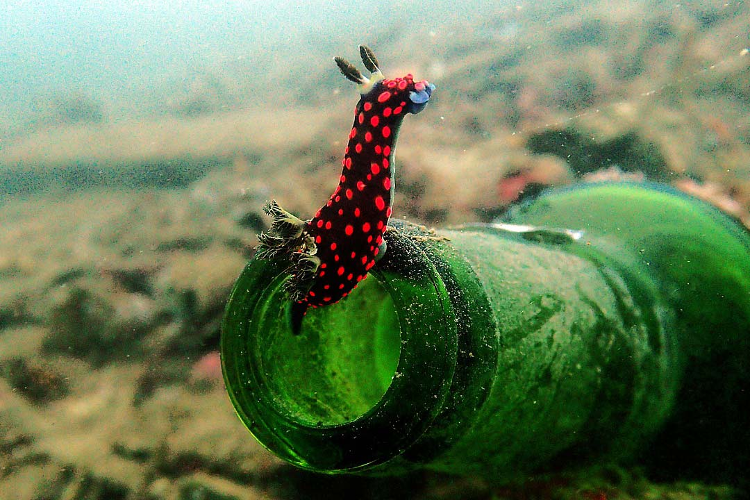 nudi-on-a-bottle