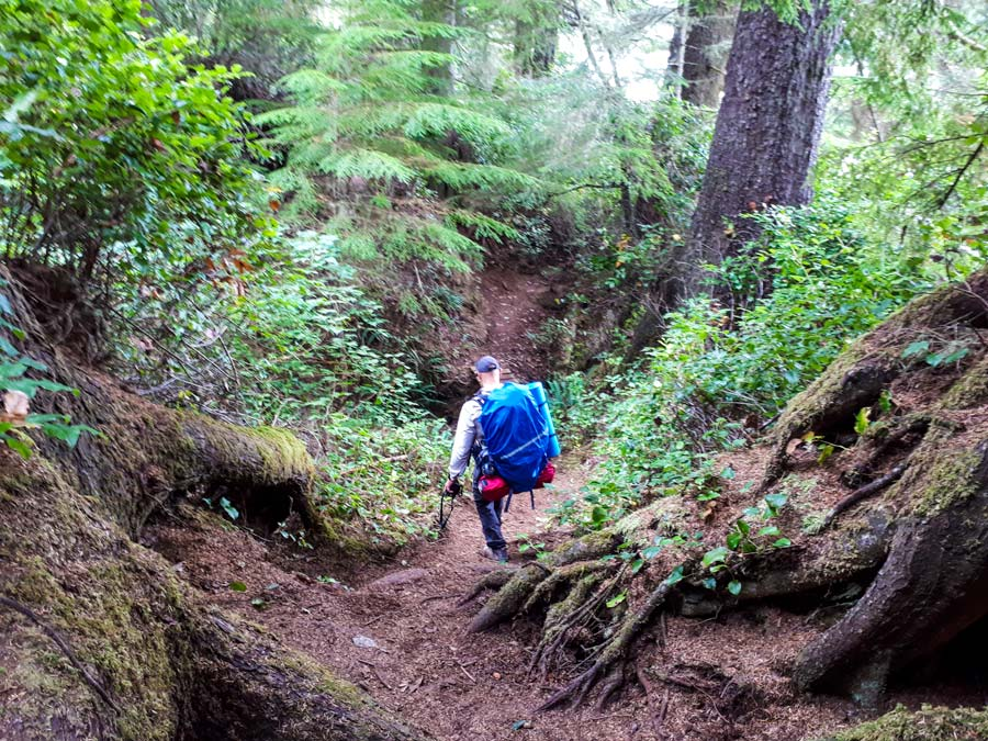 forest hike juan de fuca trail