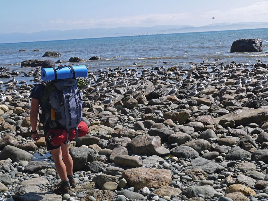 rocky beach walk juan de fuca trail
