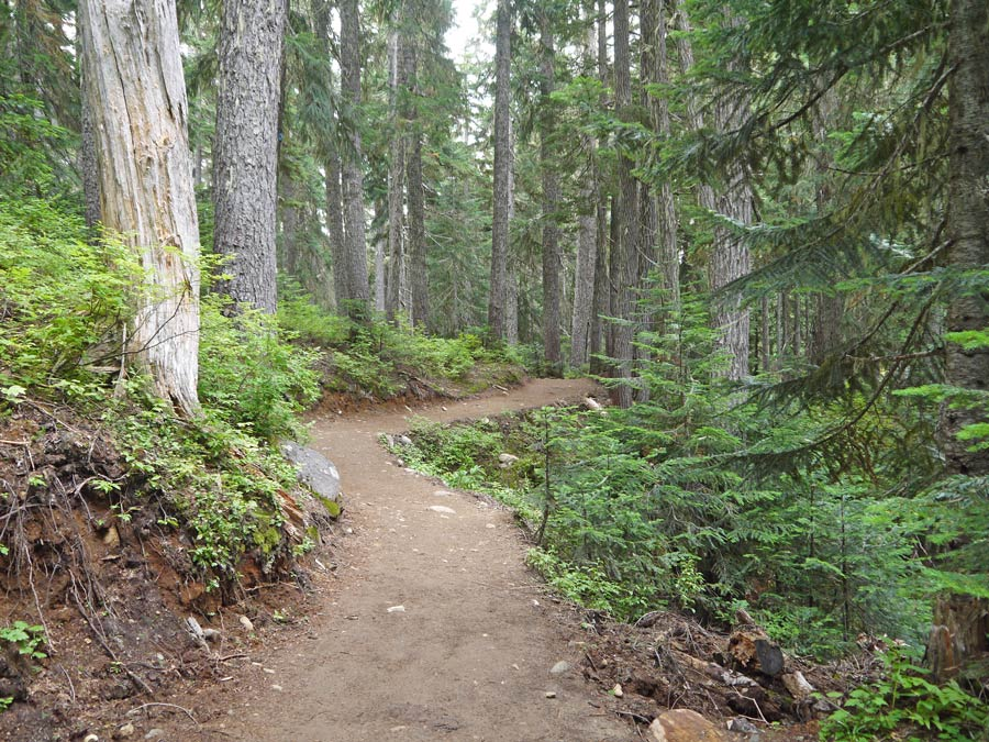 Wide, clear, well maintained trail to Garibaldi Lake.
