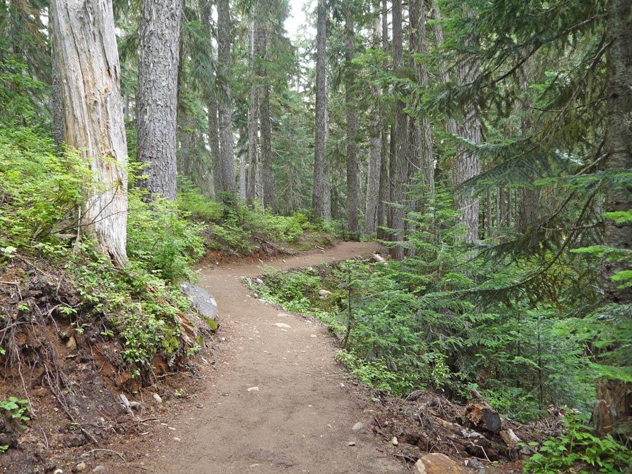 paths on Garibaldi lake hike