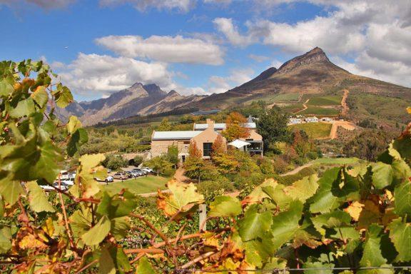 tokara wine farm stellenbosch