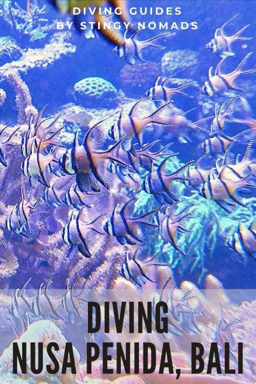 Diving Nusa Penida Bali Indonesia pin