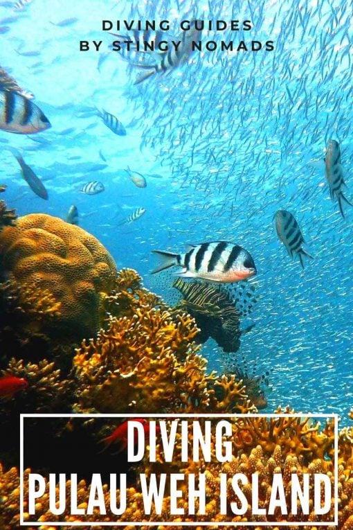 Diving Pulau Weh Island, Indonesia pin