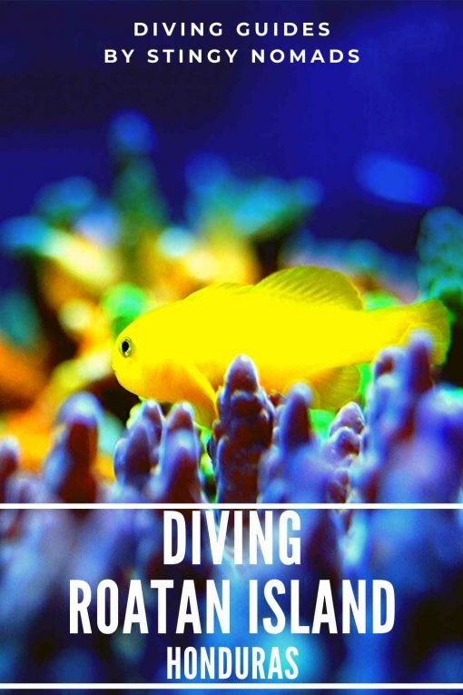 Diving Roatan Island Honduras pin