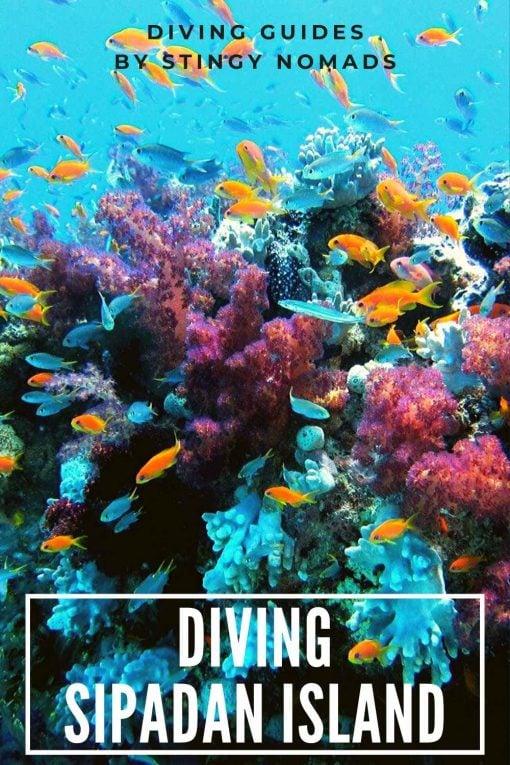 Diving Sipadan Island, Malaysia pin