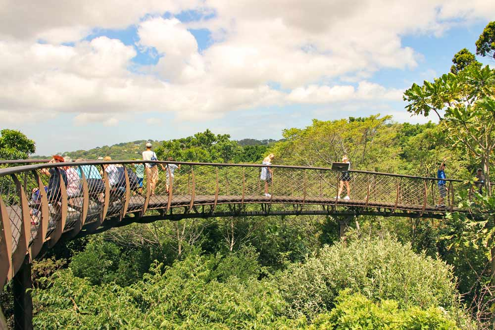 The walking bridge above the trees in Kirstenbosch Garden - not to miss in Cape Town