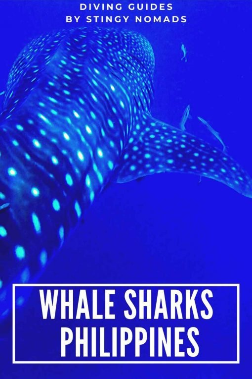 Swimming with whale sharks Philippines pin