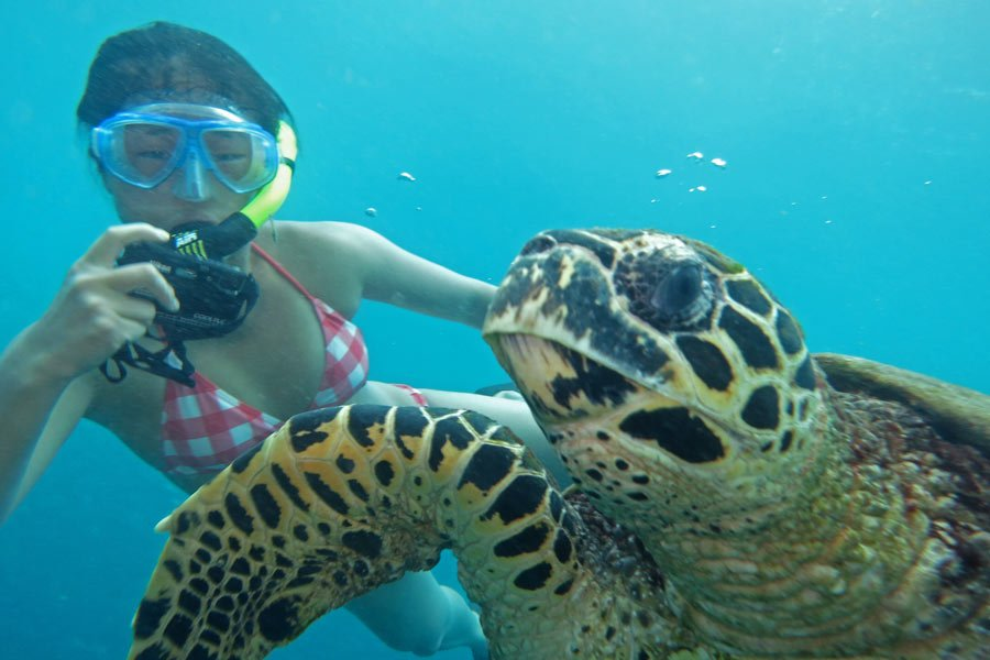 Swimming with turtles around Gili Trawangan