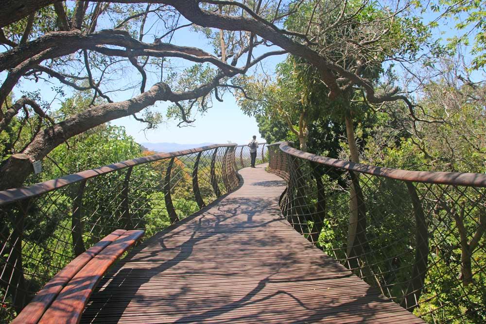 A snake-like bridge in the tree canopy in Kirstenbosch Garden