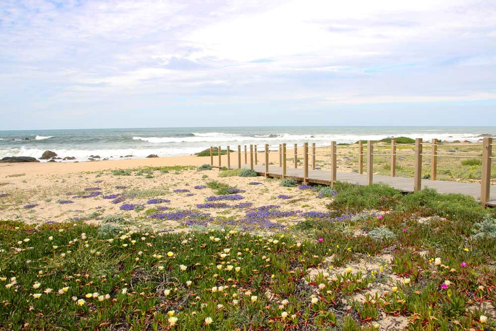 One of the many beach walking wooden paths on the Coastal Route in Portugal