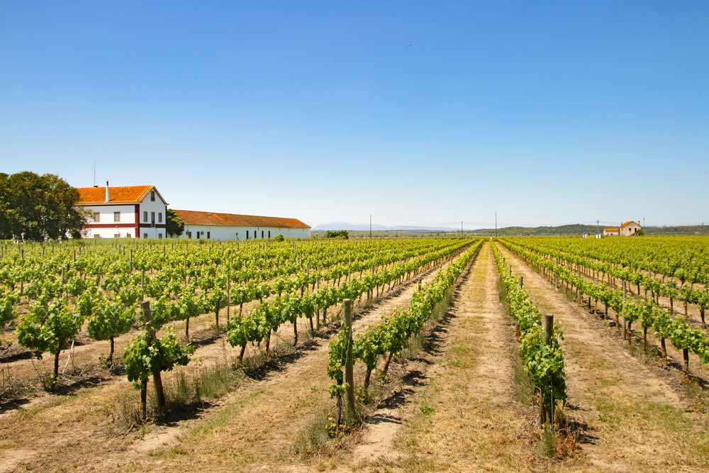 Vineyards and a big farm house in Central Portugal