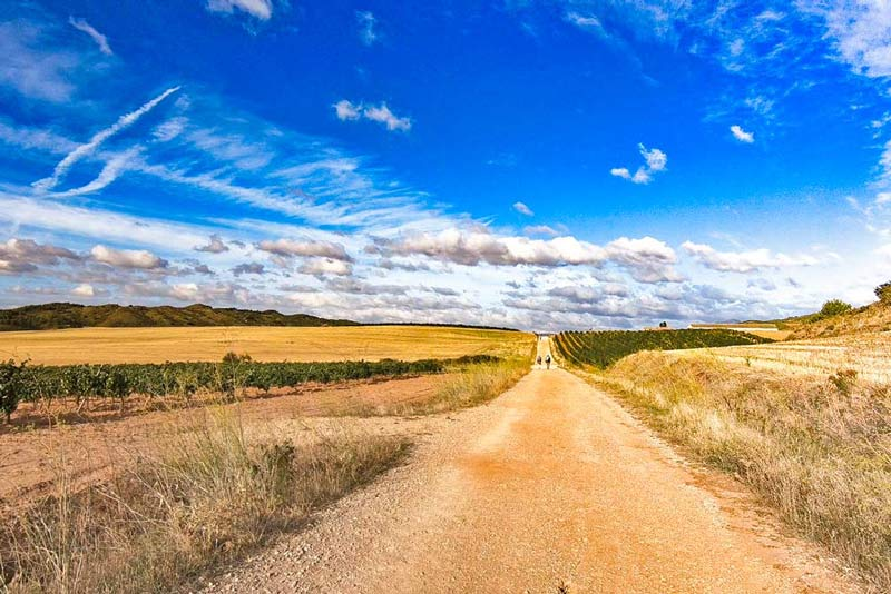 The Meseta scenery on the French Camino